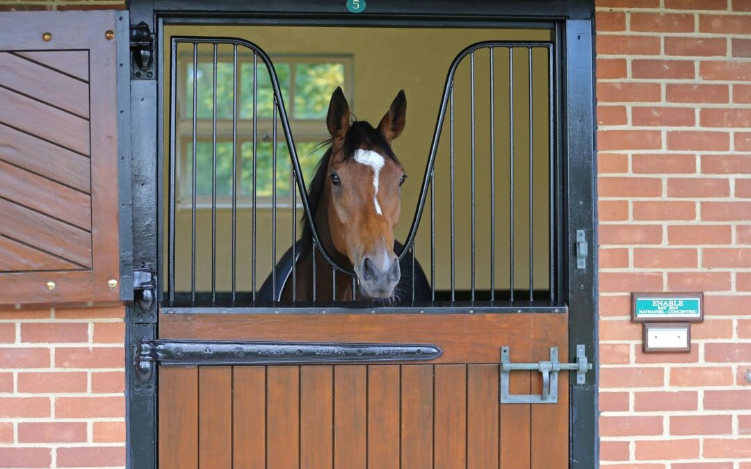 Enable en su nueva residencia